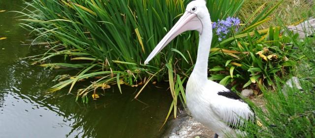 Wellington: Botanic Gardens and Zoo