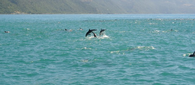 Kaikoura: Seals and Albatross and Dolphin Encounters Oh My!