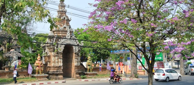 Chiang Mai: Food, Fun, and Jungle